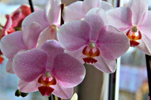 Орхидея энергетика цветка